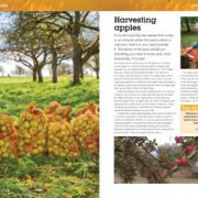 Cider-Manual-The-Practical-Guide-to-Growing-Apples-and-Making-Cider-Haynes-Manuals-0-1