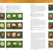 Cider-Manual-The-Practical-Guide-to-Growing-Apples-and-Making-Cider-Haynes-Manuals-0-2